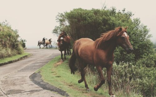 equine assisted therapy program