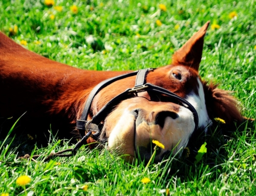 Research Finding: Therapy Horses Do Not Show Increased Stress Levels