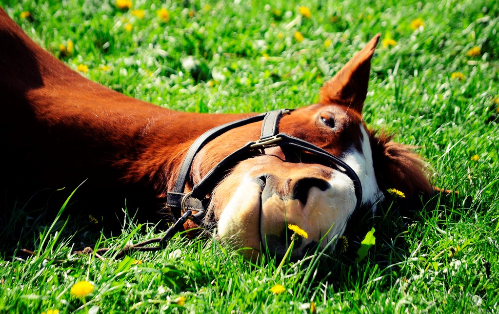 horses found not to be stressed in equine therapy programs